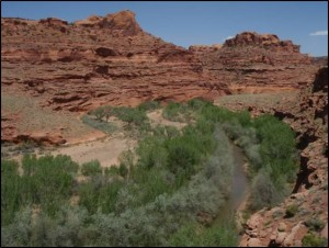 Escalante River above Twin Canyons - 2010