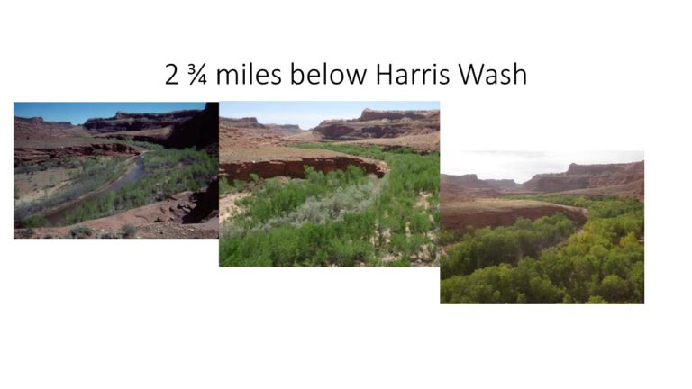Below Harris Wash
