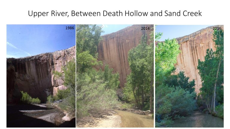 Upper River Between Death Hollow and Sand Creek