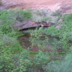 Pool at Coyote Gulch