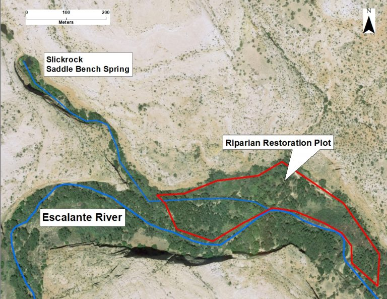 Project area for National Fish and Wildlife Foundation Bring Back the Natives grant